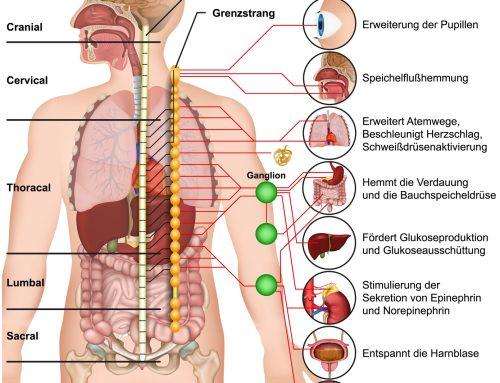 Die Therapie vegetativer Erkrankungen